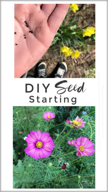 How to start seeds in peat pellets in a tray