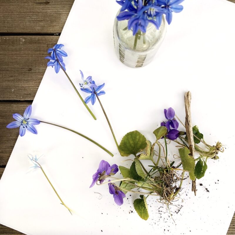 Gathering flowers for flower pressing