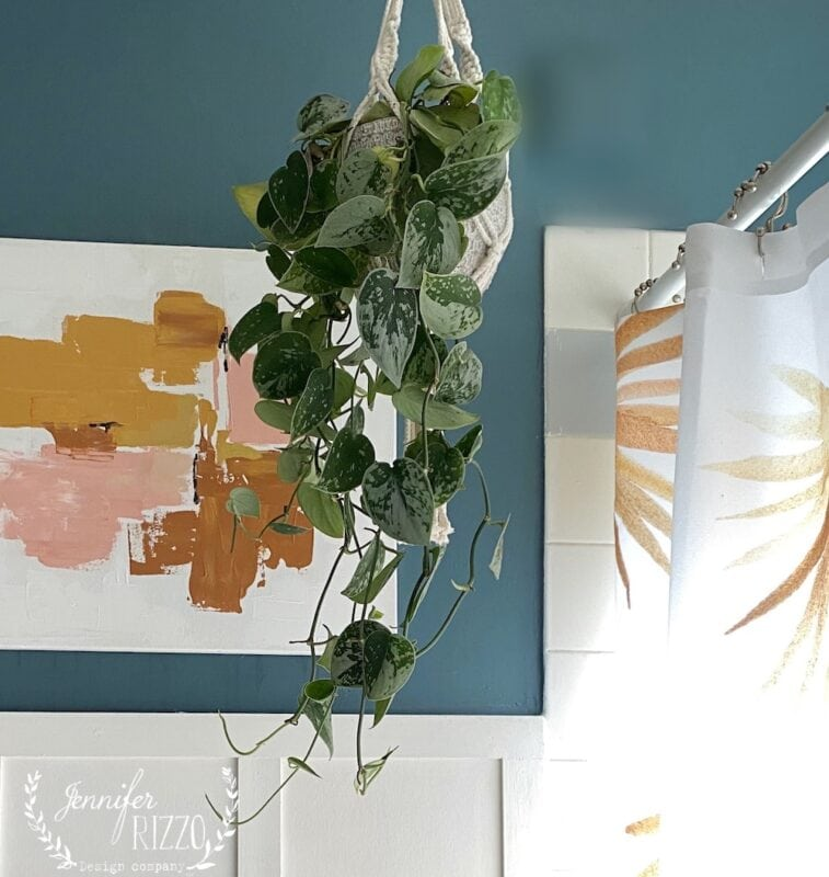 Hanging varigated pothos plant in bathroom, an easy to grow and care for indoor plant