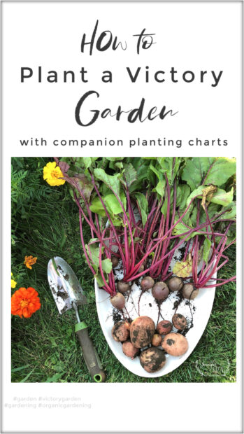 How to plant a Victory Garden with Companion planting