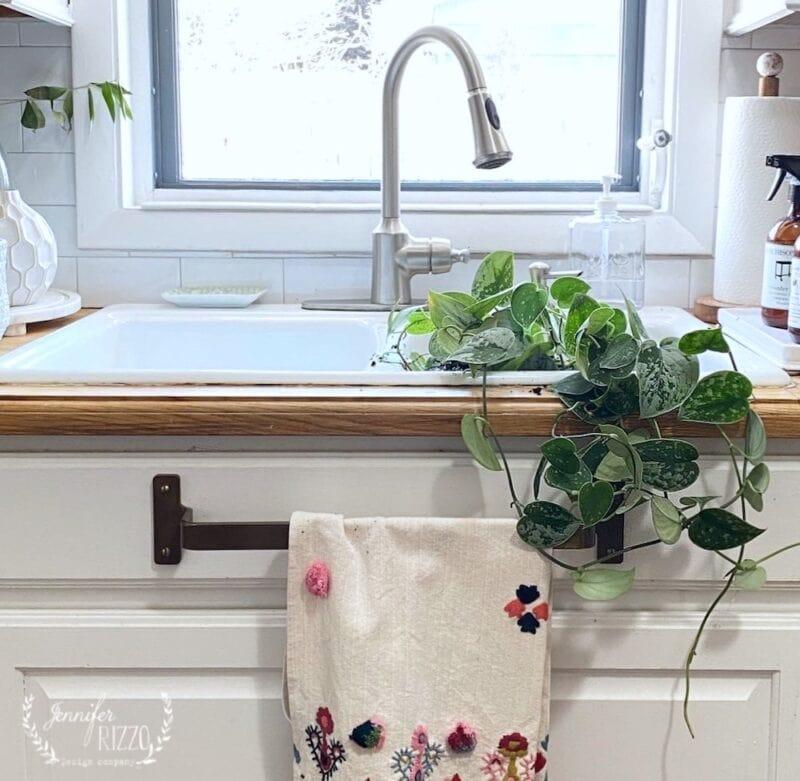 Pothis plant in kitchen sink