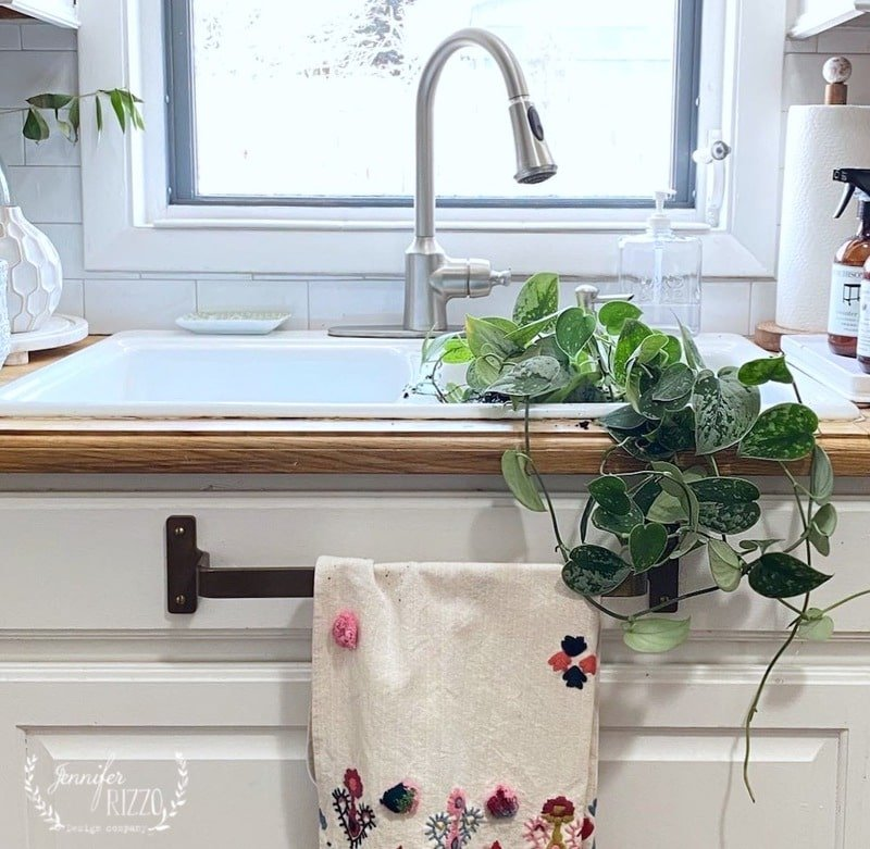 3 Easy to Care for Houseplants and Free Plant Printable