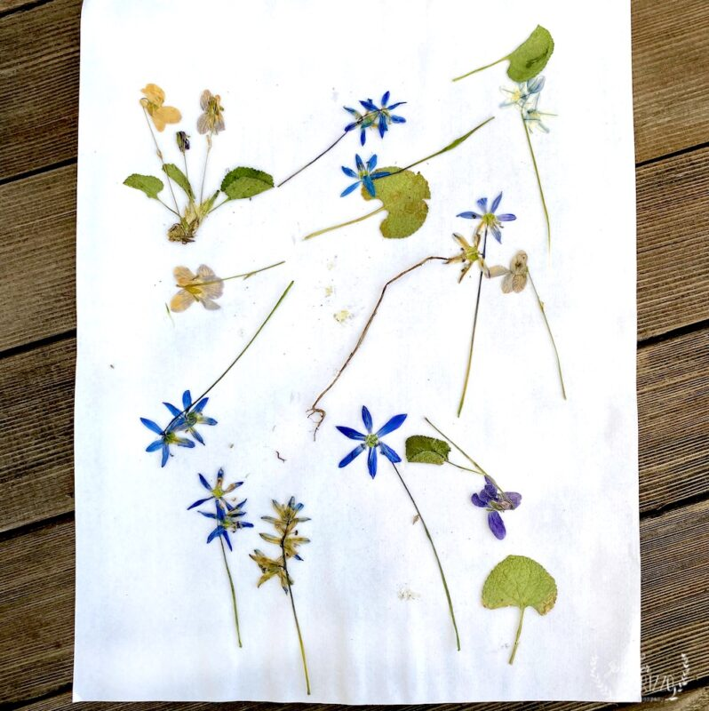 Dried and pressed flowers for crafts