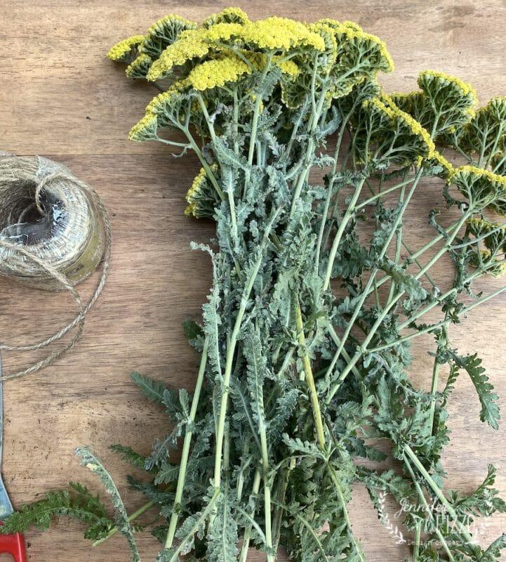 Preparing Yarrow for dried flower arrangements