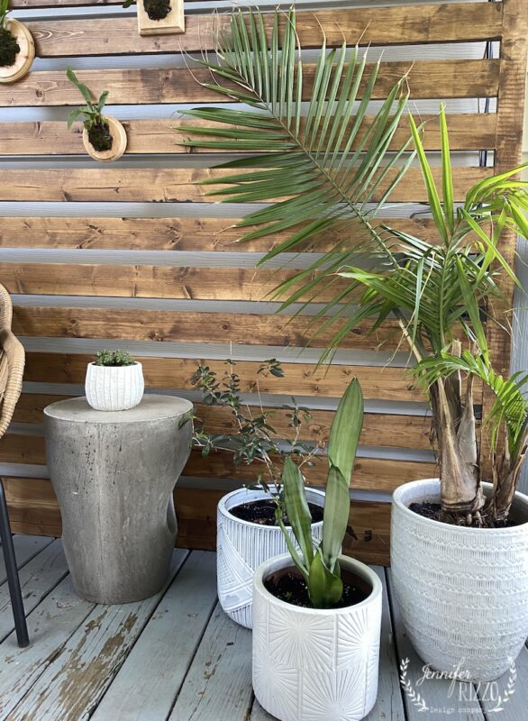 Tropical plants in white ceramic pots for deck decor