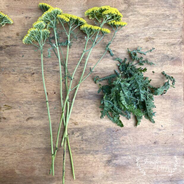 Making dried flower arrangements