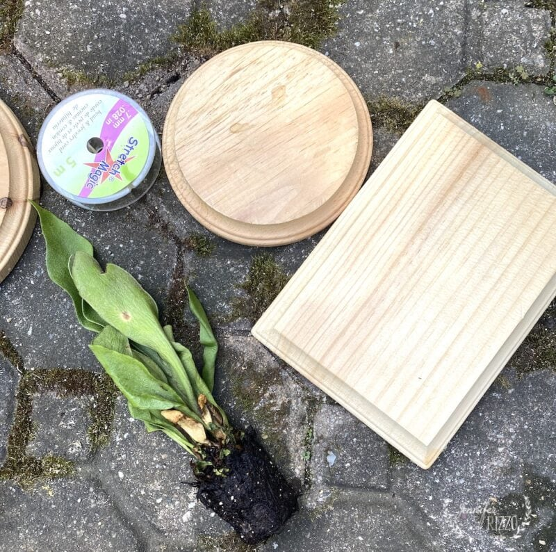 Supplies to mount a Staghorn Fern on a craft plaque