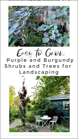 Easy to grow purple and bugundy trees and shrubs for landscaping