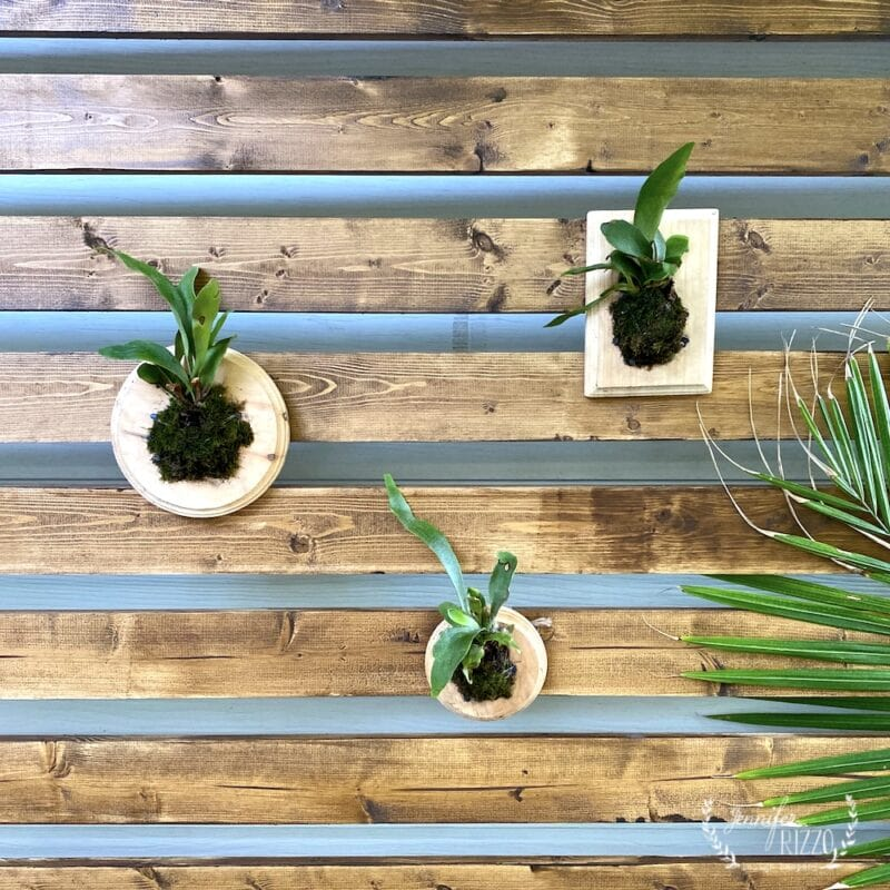 Staghorn ferns mounted on a wood panel and wood plaques