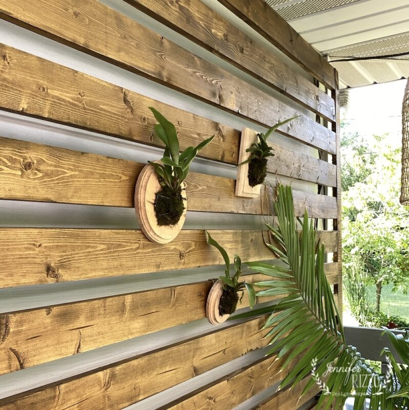 Staghorn Ferns on Wood plaques