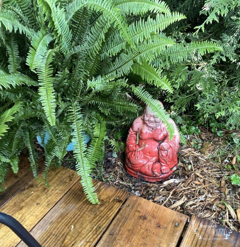 Buddha and fern in the back yard