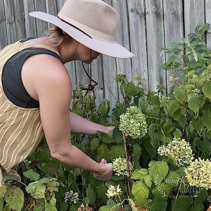 Jennifer Rizzo cutting hydrangeas