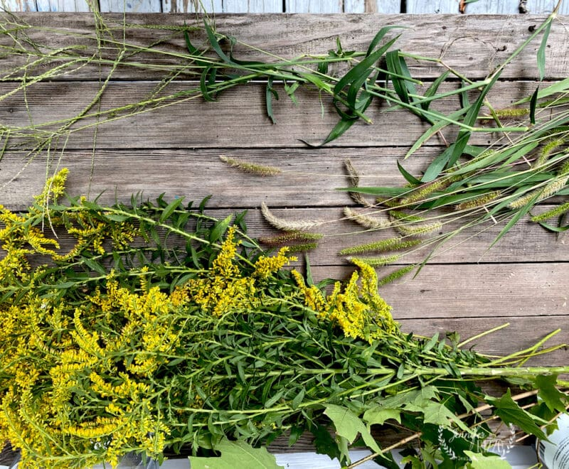 goldenrod and grasses