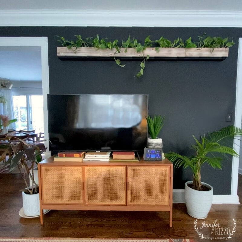 Black wall with living plant