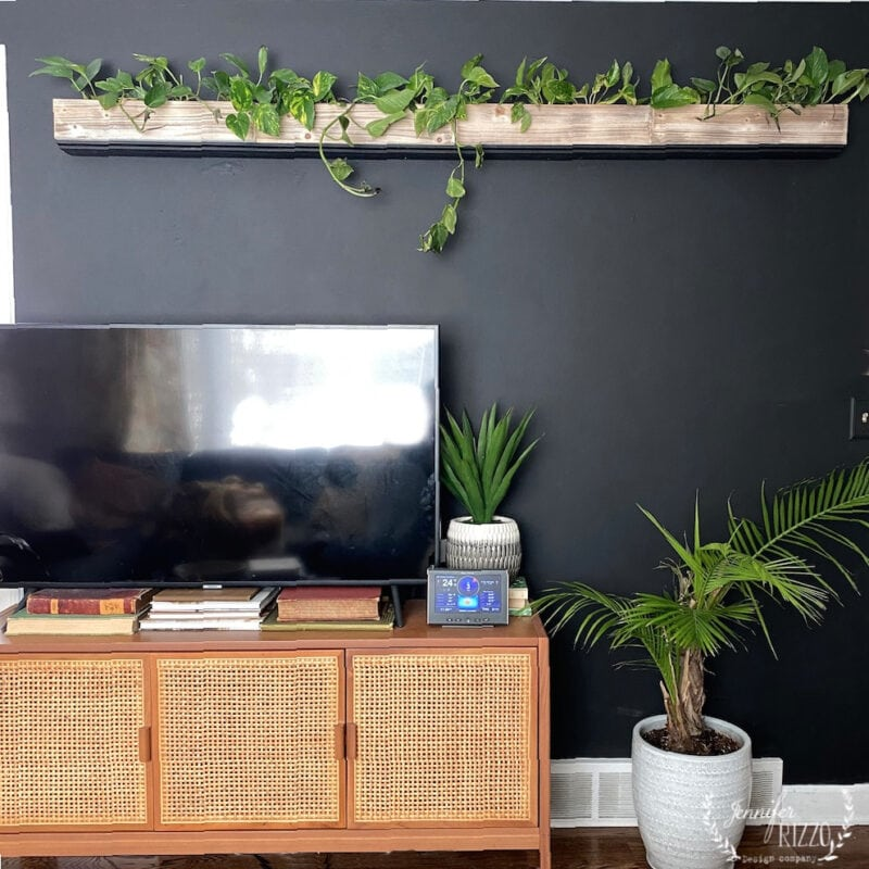 DIY Hanging living plant wall against a black wall