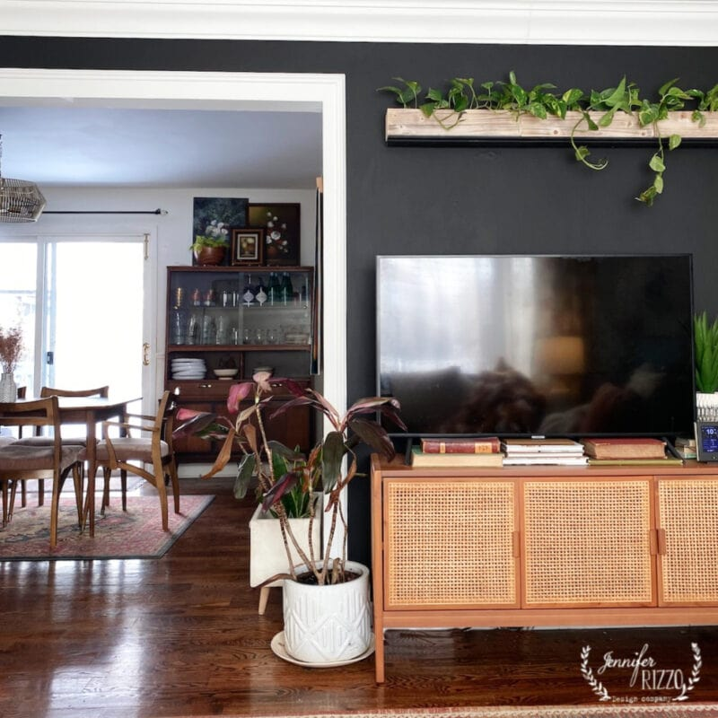Living plant wall on a black wall