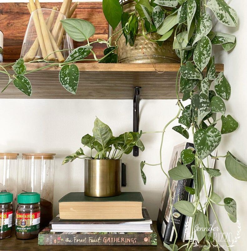 Trailing Pothoe plant on open shelves