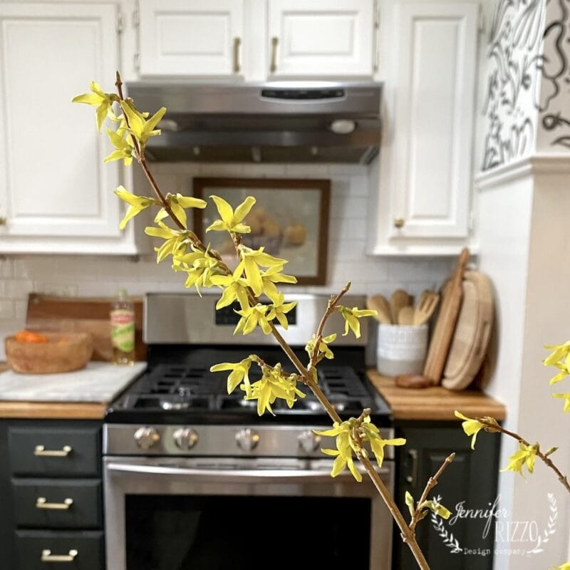 Indoor forced forsythia branches in March