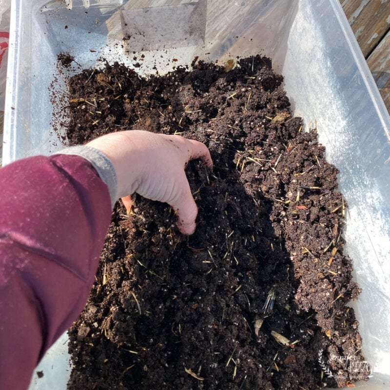Use old potting soil to create a Marigold seed starter