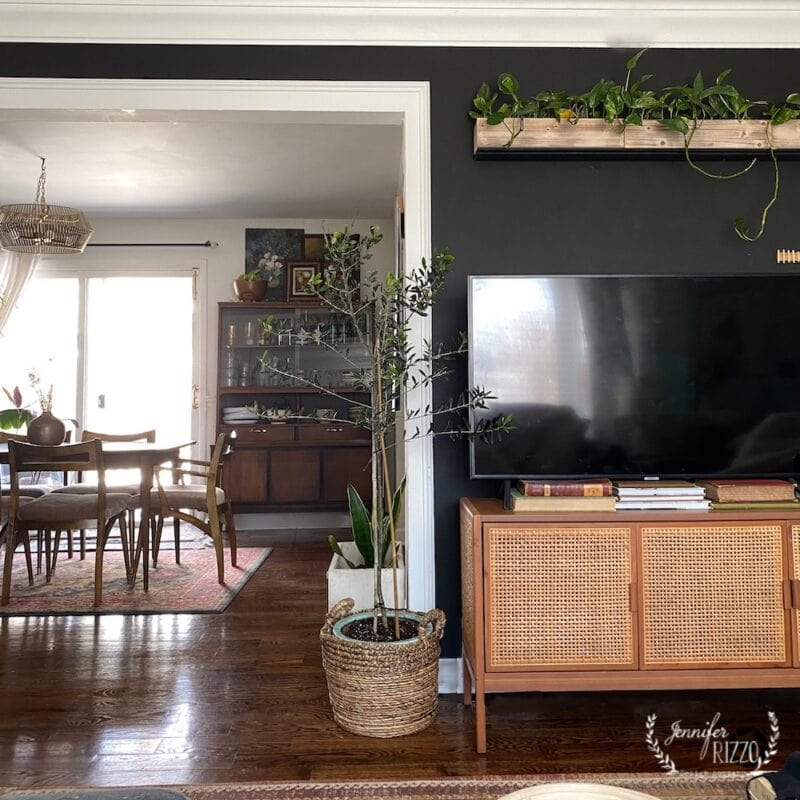 Benjamin Moore Universal Black Wall Paint color 2118-10 in a bohl living room with a plant wall