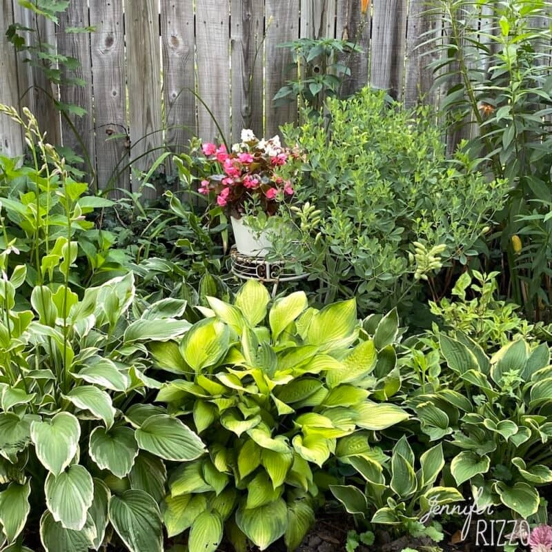 Add potted annuals for color