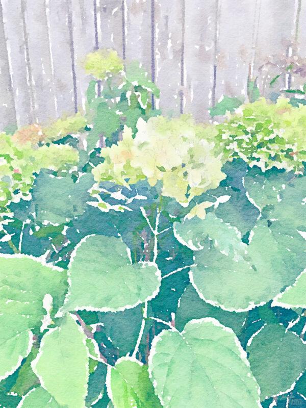Free hydrangea watercolor printable