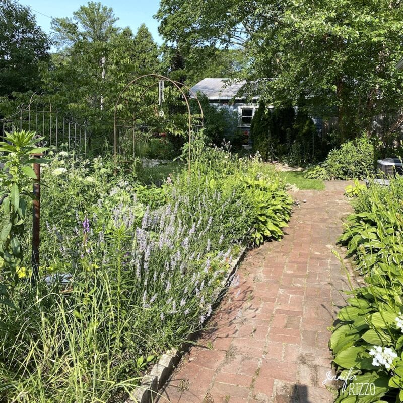 Garden with a mix of veggies and. flowers to attract benficial insects
