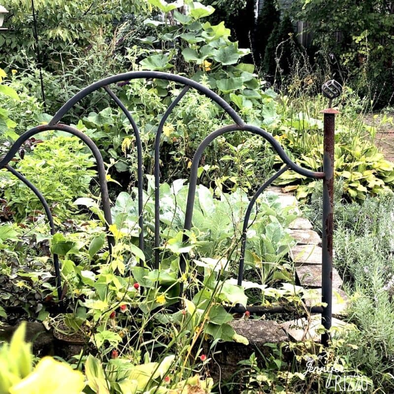 Growing Vegetables on a trellis or arbor