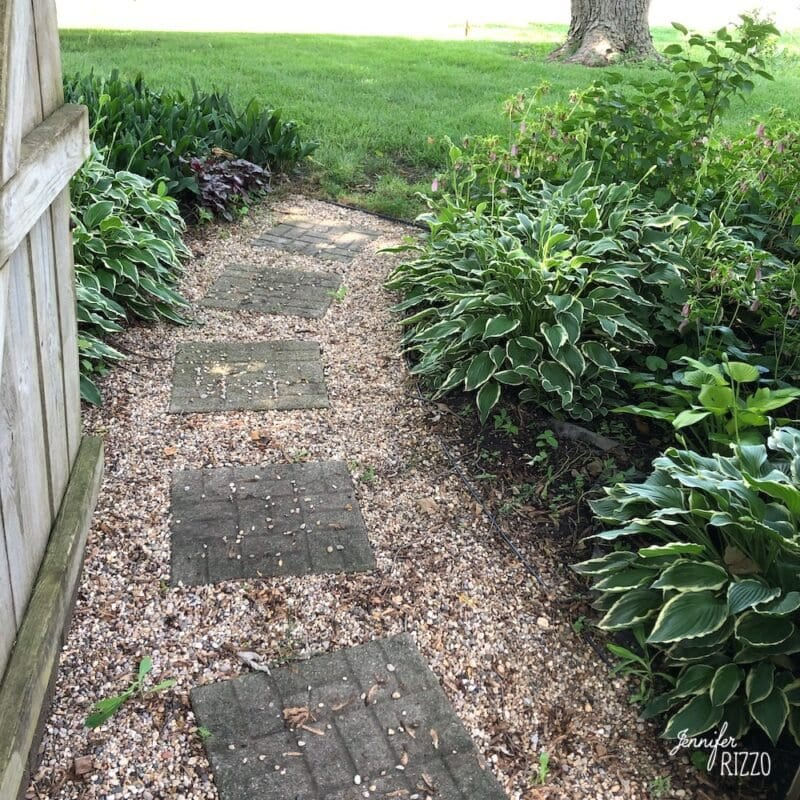 Pea gravel and stepping stone path with hosta