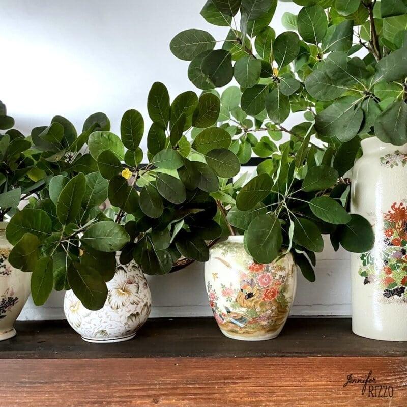 Smoke bush leaves in vintage vases
