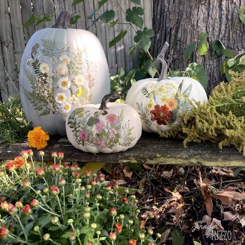Dried floral decoupaged pumpkins
