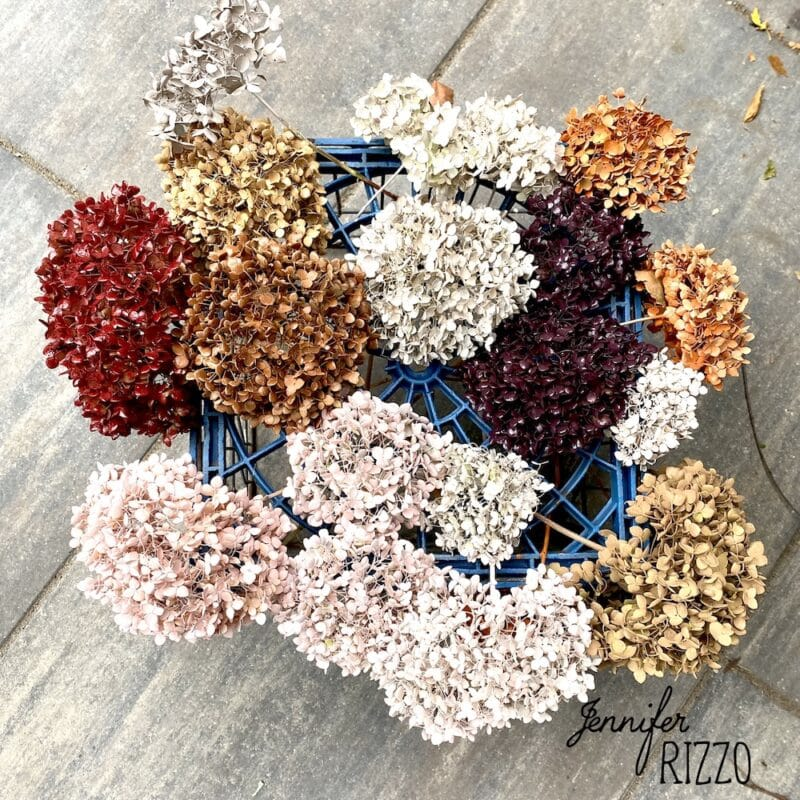 Dried hydrangeas painted with spray paint