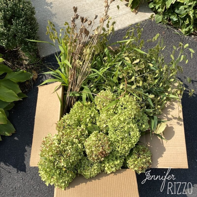 Hydrangeas and grasses for drying